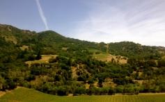 central california vineyards