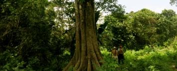 exploring the jungle of la huasteca potosina with a couple of new friends, San Luis Potosí