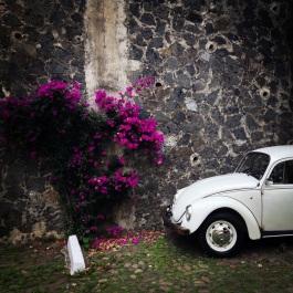 bug and boquet, Tlalpan, Mexico City