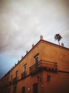peeking palm, Querétaro, Querétaro