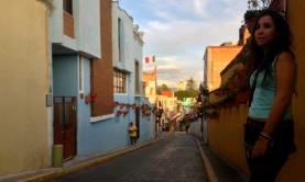 smiley wallflower, Atlixco, Puebla