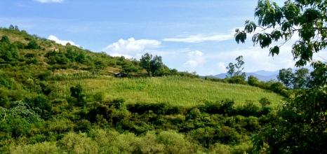 humble field. Oaxaca