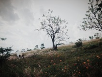 fairy tale grazing horse. Oaxaca