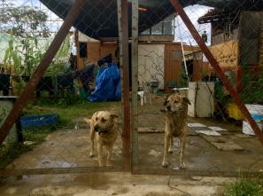 thanks for guarding my motorcycle, my dawgs. Oaxaca, Oaxaca