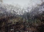 spooky spiky forest, Playa Carbón, Costa Rica