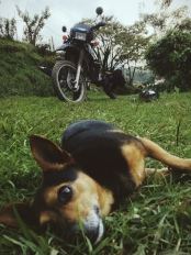 nearly everywhere I've camped I've been accompanied by an unexpected companion, Costa Rica