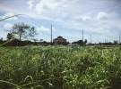 forlorn field factory, Colon Panamá