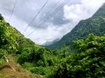 connected jungle, Guatemala