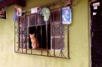 curious survivor, Huehuetenango, Guatemala