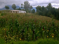 shy house, Guatemala