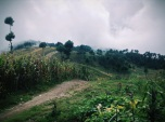 misty mountains and furry fields, Guatemala