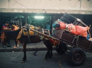 caballo pesado, León, Nicaragua