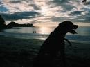 silhouetted ceci seeing sea, Playa Prieta, Costa Rica