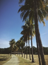 artificial nature, Playa Brasilito, Costa Rica