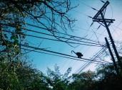 monkeying around, Playa Grande Costa Rica