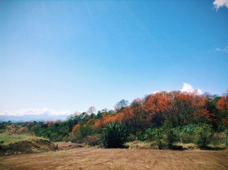 fall trees in a Costa Rican summer