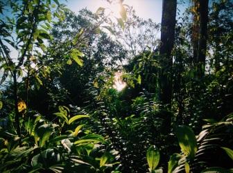 jungly, Costa Rica