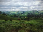 The picture perfect rolling hills of Antioquia