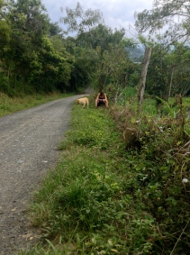 Two friends shy away from one another, but only for a moment. Cundinamarca