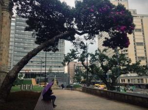 Flowering umbrella, Bogotá