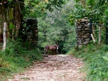 A donkey fiercely protects his territory with just a look, Antioquia