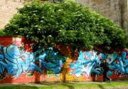 Nature interfering with art, La Macarena, Bogotá