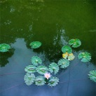"""""""He goes along just as a water lily Gentle on the surface of his thoughts his body floats Unweighted down by passion or intensity Yet unaware of the depth upon which he coasts""""- F. Apple, Ecoaldea Feliz, Cundinamarca"""