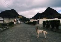 mountain town protector, Zumbahua