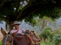 Freddy readies his donkey for the harvest, Chawarpata
