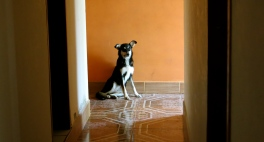 loyal homie chilling on cool tiles, Chawarpata