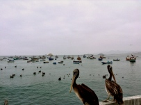 Two pelicans too timid to tango. Huramey