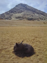 A hairless dog lies on a grassless patch of sandy ground on Inca-less territory. Trujillo