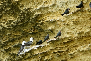 Birds of a different feather hanging together. Paracas
