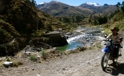 A Colca Canyon local makes his rounds in his beautiful backyard.