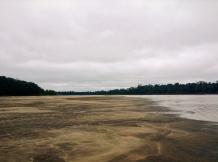 Basin basking in Rio Madre de Dios. Puerto Maldonado