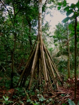 One life with many different roots. Puerto Maldonado