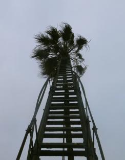 coco climber's cure. Callao