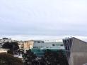 school gulls, San Francisco