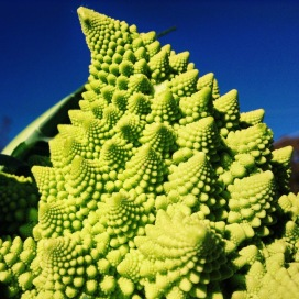 The secrets of the universe may or may not be held in the crossing of cauliflower and broccoli... Delete Comment