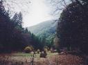 meadow meanderings