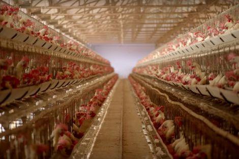 chicken_coop1.0